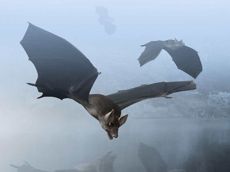 Where Did Bats Come From? |Science    | Smithsonian Magazine